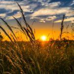 Stymulatory wzrostu w rolnictwie